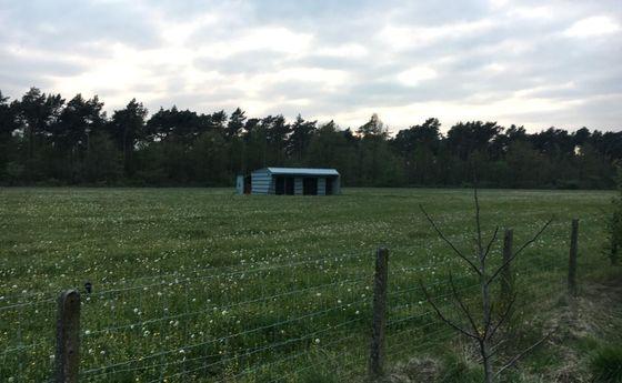 Landbouw grond te koop in Meeuwen-Gruitrode